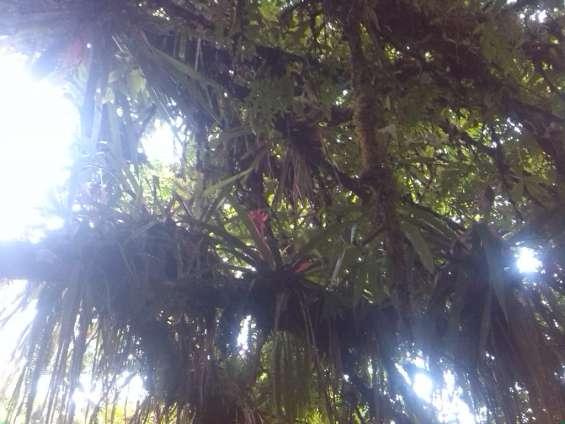 Fotos de Finca rodeada de naturaleza con lindas vistas, bosque,potrero,3 nacientes de agu 3