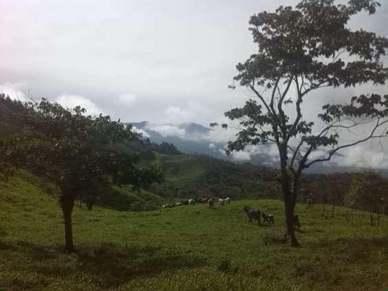 Fotos de Finca rodeada de naturaleza con lindas vistas, bosque,potrero,3 nacientes de agu 2
